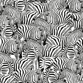 Zebra Colony