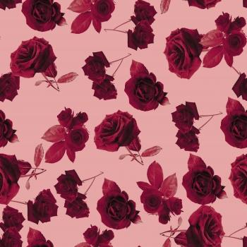 Maroon Velvet Roses