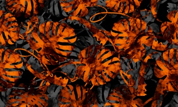 Orange Monstera