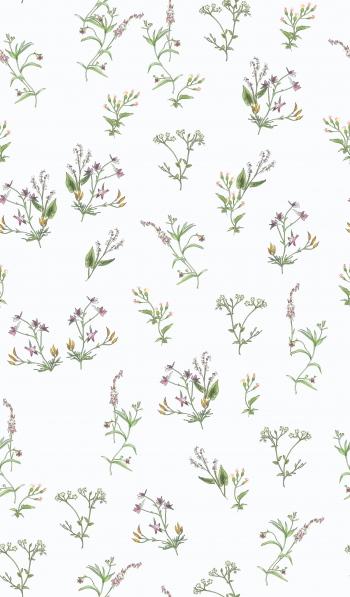 Illustrated Wild Flowers