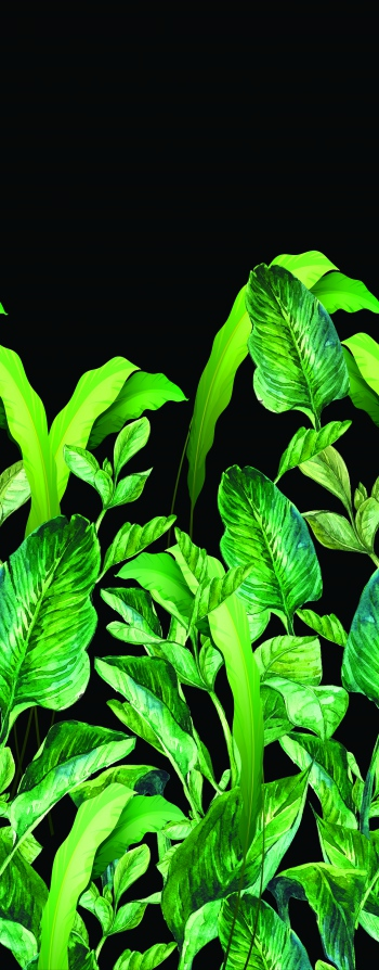 Green_Foliages