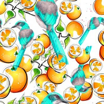 Oranges and Birds
