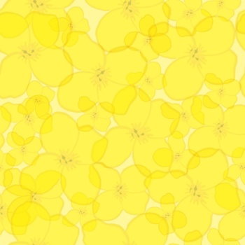 Safari West Mustard flower