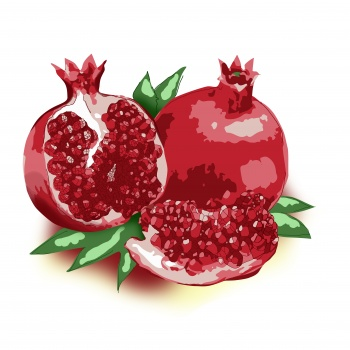 Illustration of Pomegranate