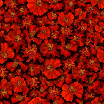 Red Floral Bed