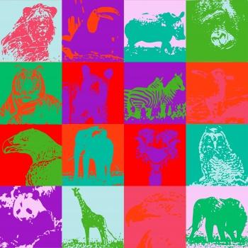 Portraits of Wildlife animals