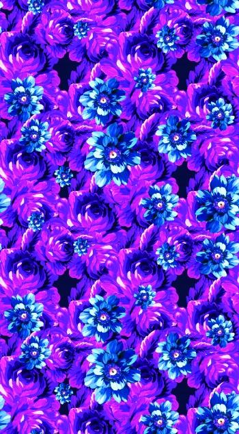 Purple rose_2457