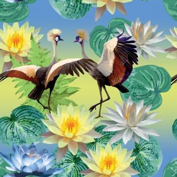 Bird`s dances and waterlilies