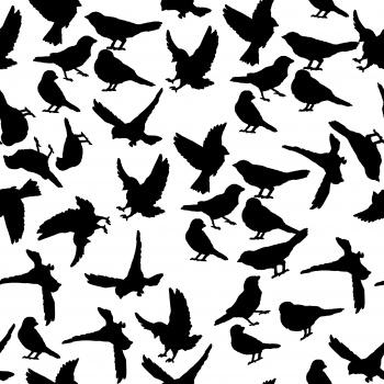 Black Birds and Black Birds