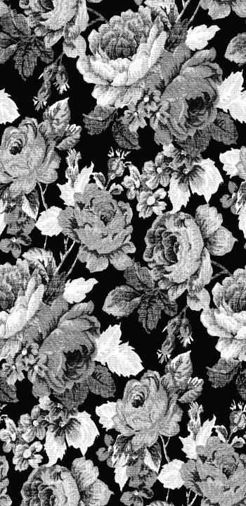 Dominant Grey Roses