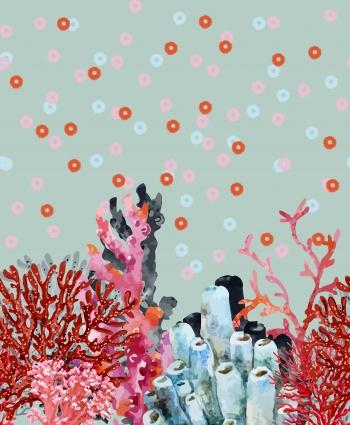 Gorgeous Corals