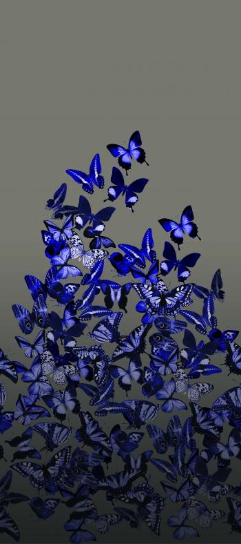 Gradient butterflies