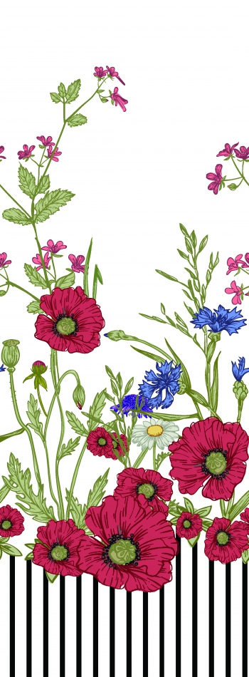 Illustrated poppies