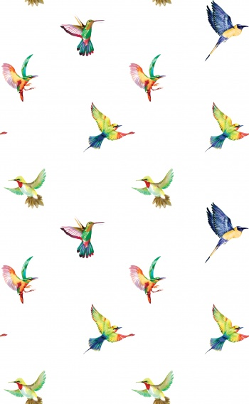 Multicolored birds