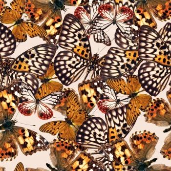 Nostalgic Butterflies