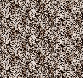 Ordinary Leopard