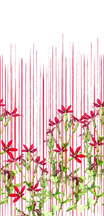 Red lines and red flowers