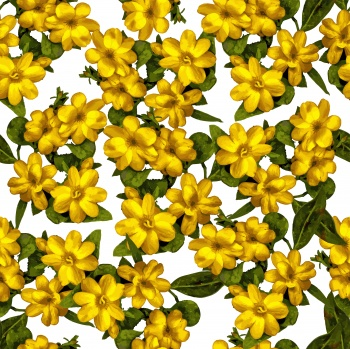Simple vector drawn yellow flowers