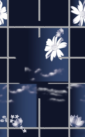 White daisy, like a bride