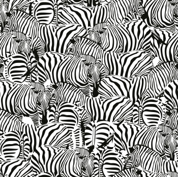 Zebra Colony